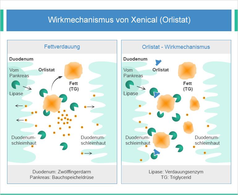 Wirkung von Orlistat